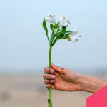 Green Influencer: 7 profili da seguire